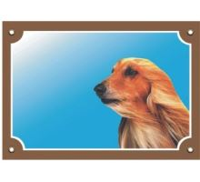 Barevná cedulka Pozor pes Afghánský chrt