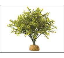 Rostlina EXO TERRA Boxwood Bush 1ks