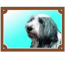 Barevná cedulka Pozor pes Bearded kolie