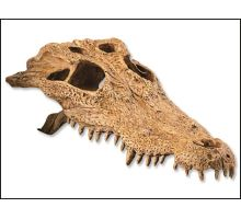 Dekorace EXO TERRA krokodýlí lebka 1ks