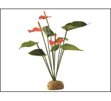 Rostlina EXO TERRA Anthurium Bush 1ks
